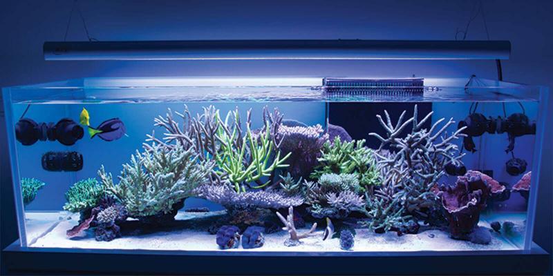 How High Should I Hang / Mount My Aquarium Light?