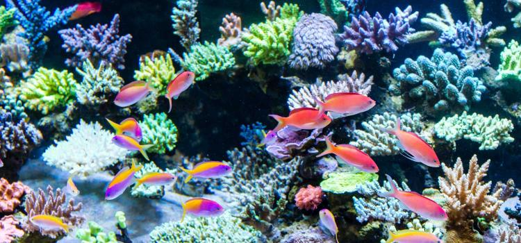 Top Tips for Changing the Water in Your Aquarium