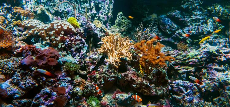 Top 5 Most Common Problems in a Reef Tank