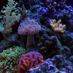 Nano Reef Aquariums: Pros vs. Cons
