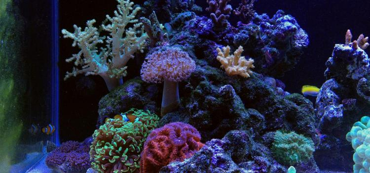 Nano Reef Aquariums: Pros vs. Cons