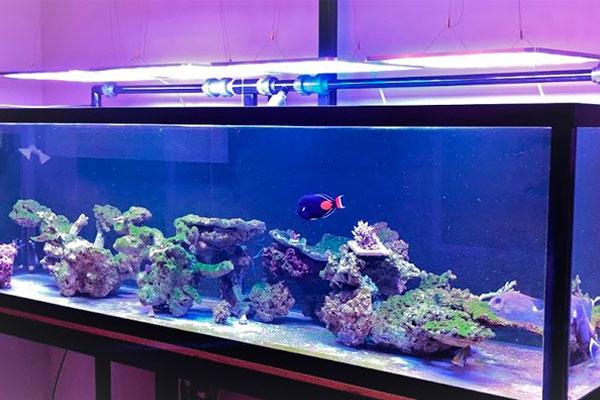 Reef-Engineer's Tank