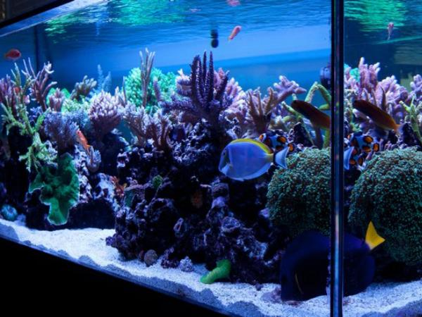 Thriving Reef Tank