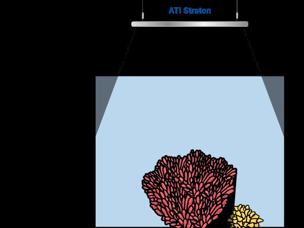 coral shadows straton