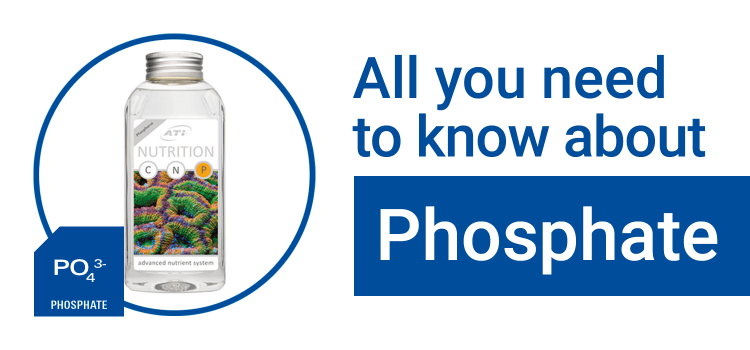 All You Need to Know About: Phosphate