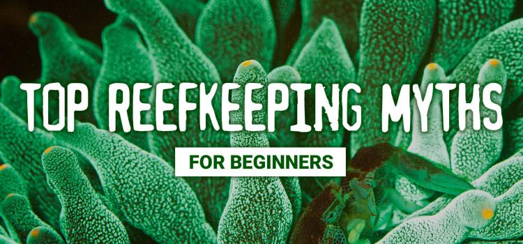 Top Reefkeeping Myths: For Beginners